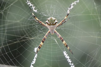 spider web design